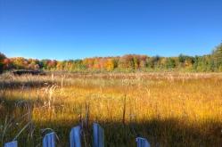Saul Lake Bog