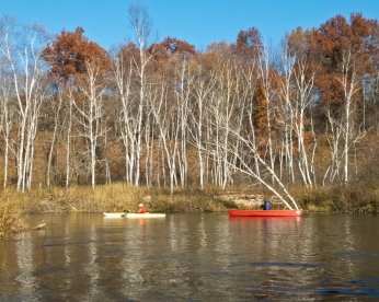 Keith and Ken paddling past birches in the sunlight