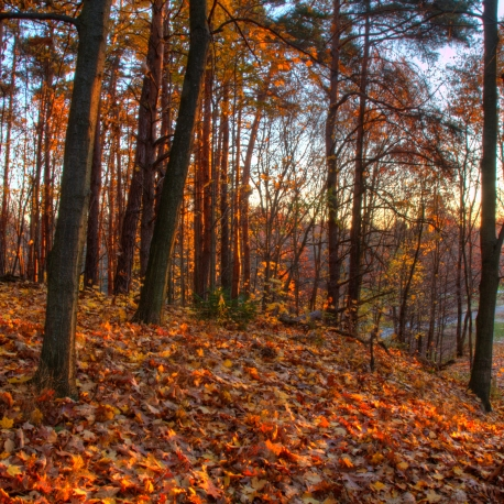 The morning light brings out the colors of the fallen leaves