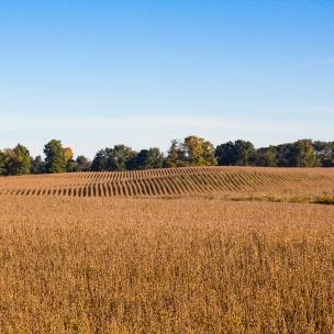 Cannonsburg Field