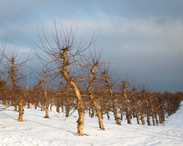 Four Mile Apple Orchard-2480