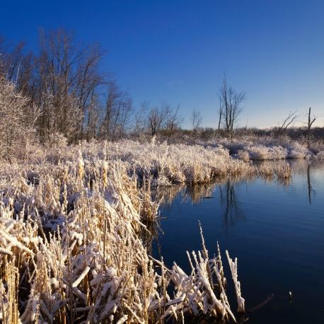 Reeds Lake--3