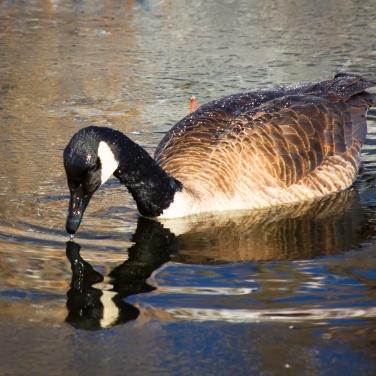 Reeds Lake--4
