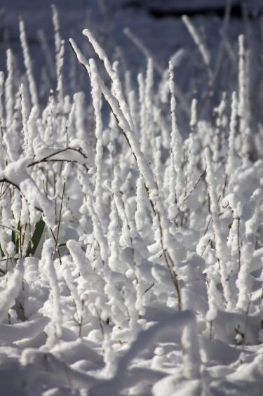 Reeds Lake-4168