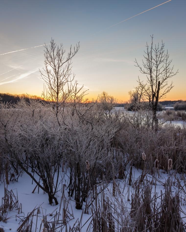 reeds-lake-before-dawn-6489