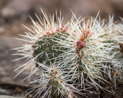 Cactus on rim-8030