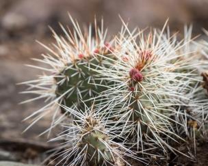 Cactus on rim-8030