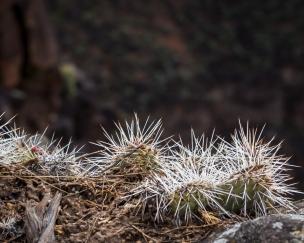 Cactus on rim-8032