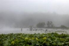 Foggy morning on Pickerel Lake #PureMichigan #Puremittigan #michiganders #thegreatlakesstate #michiganview #lakescape #fog #foggy