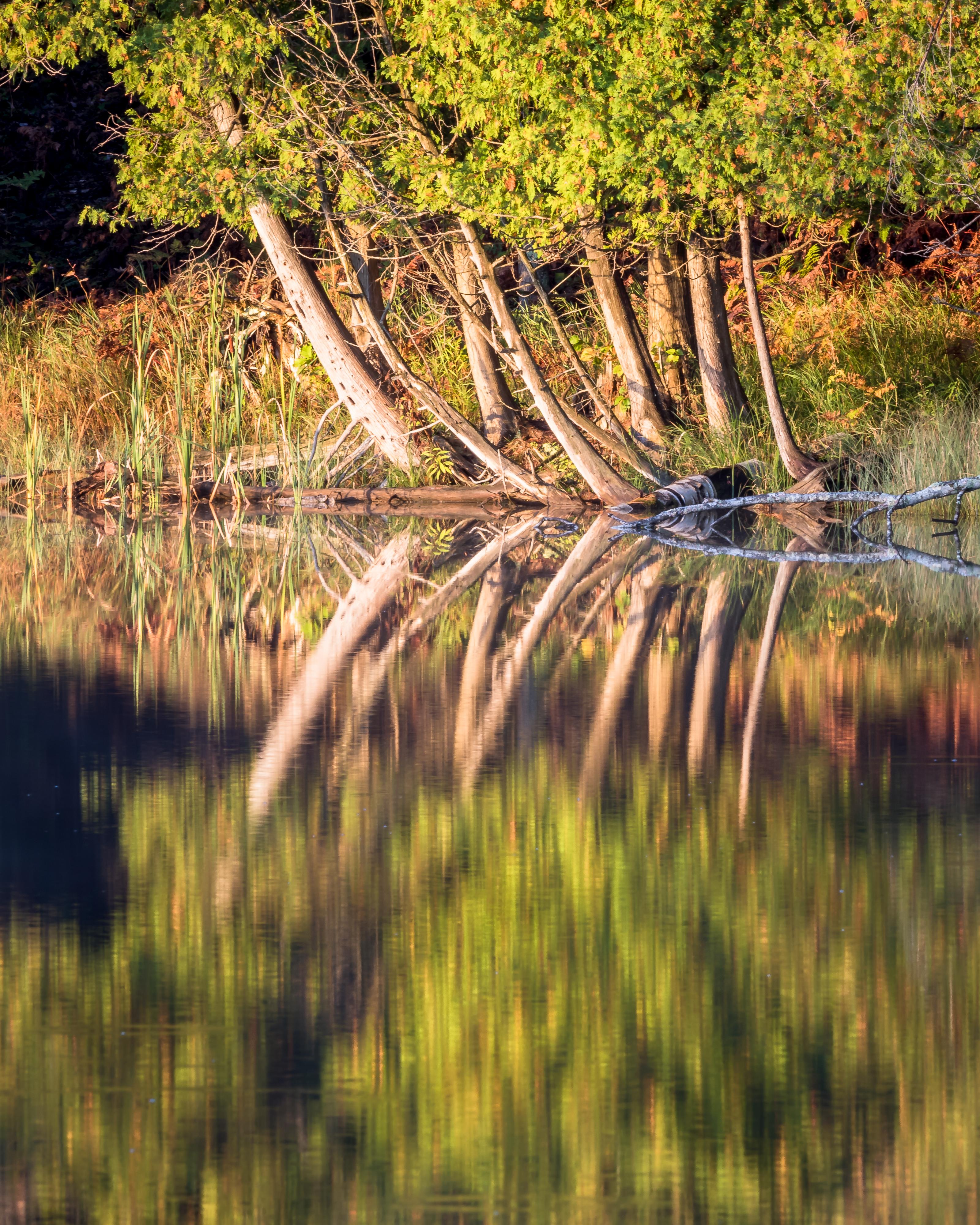 Bass Lake-1403-2