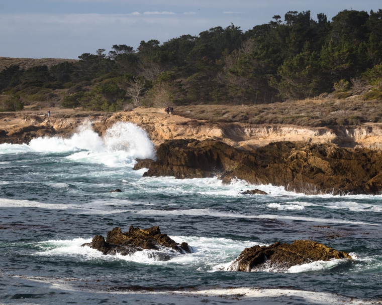 Point Lobos-2246