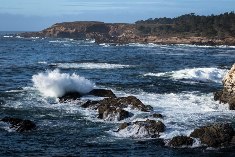 Point Lobos-2281