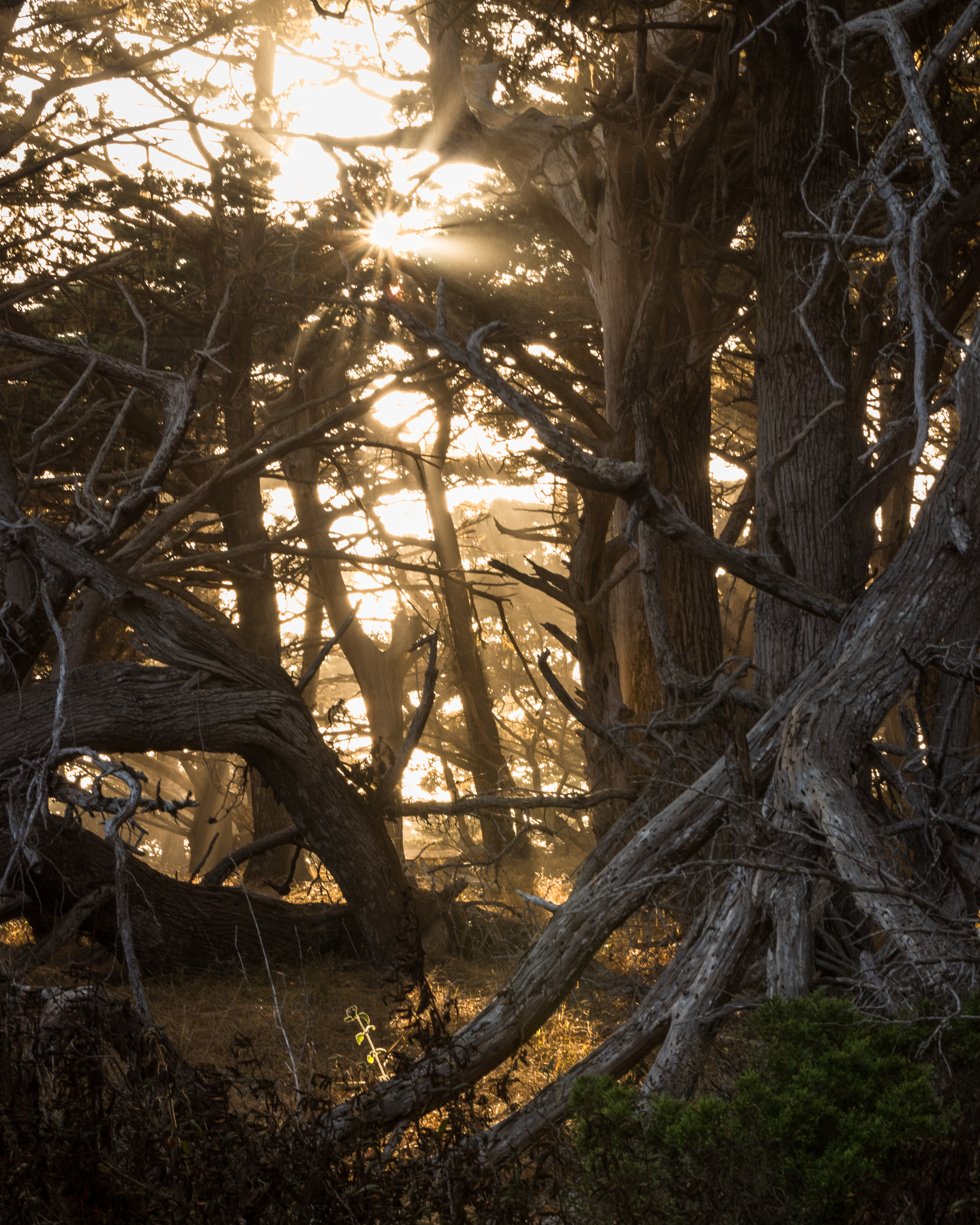 Point Lobos-2302