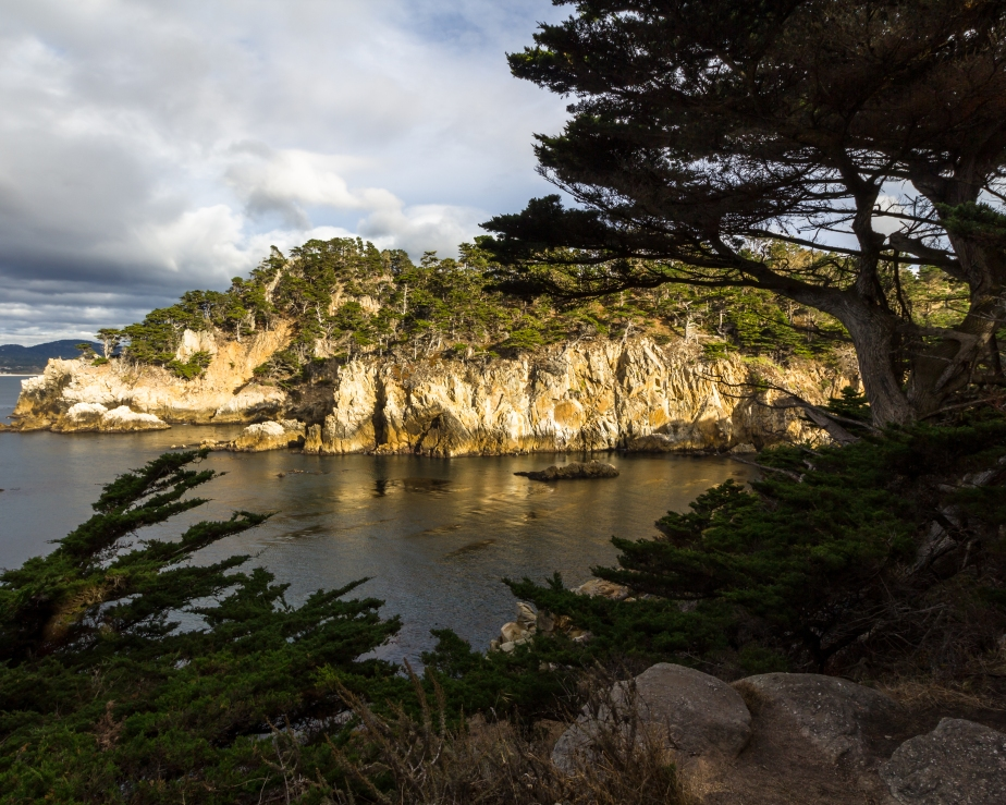 Point Lobos-7629