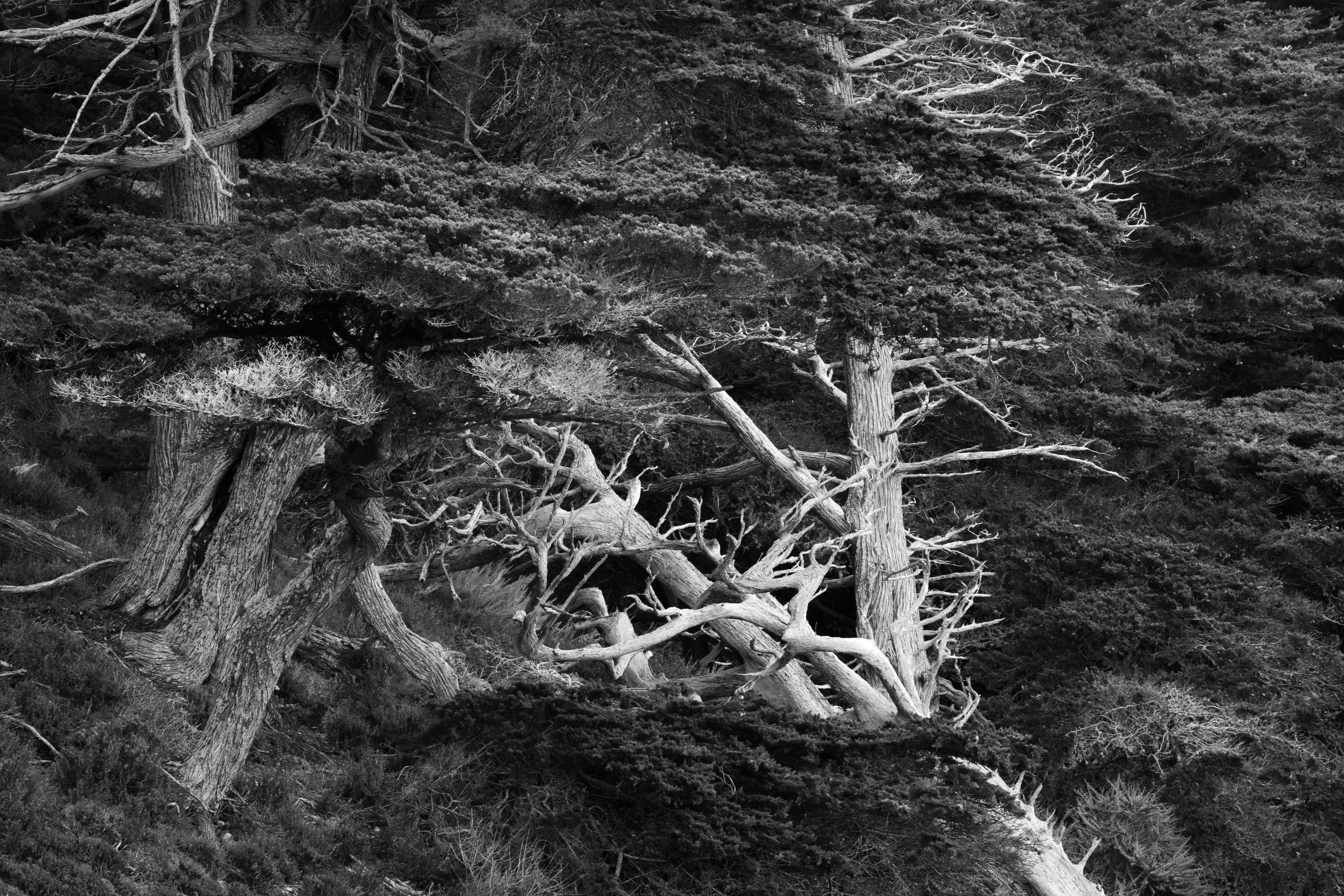 Point Lobos B&W-2034-2