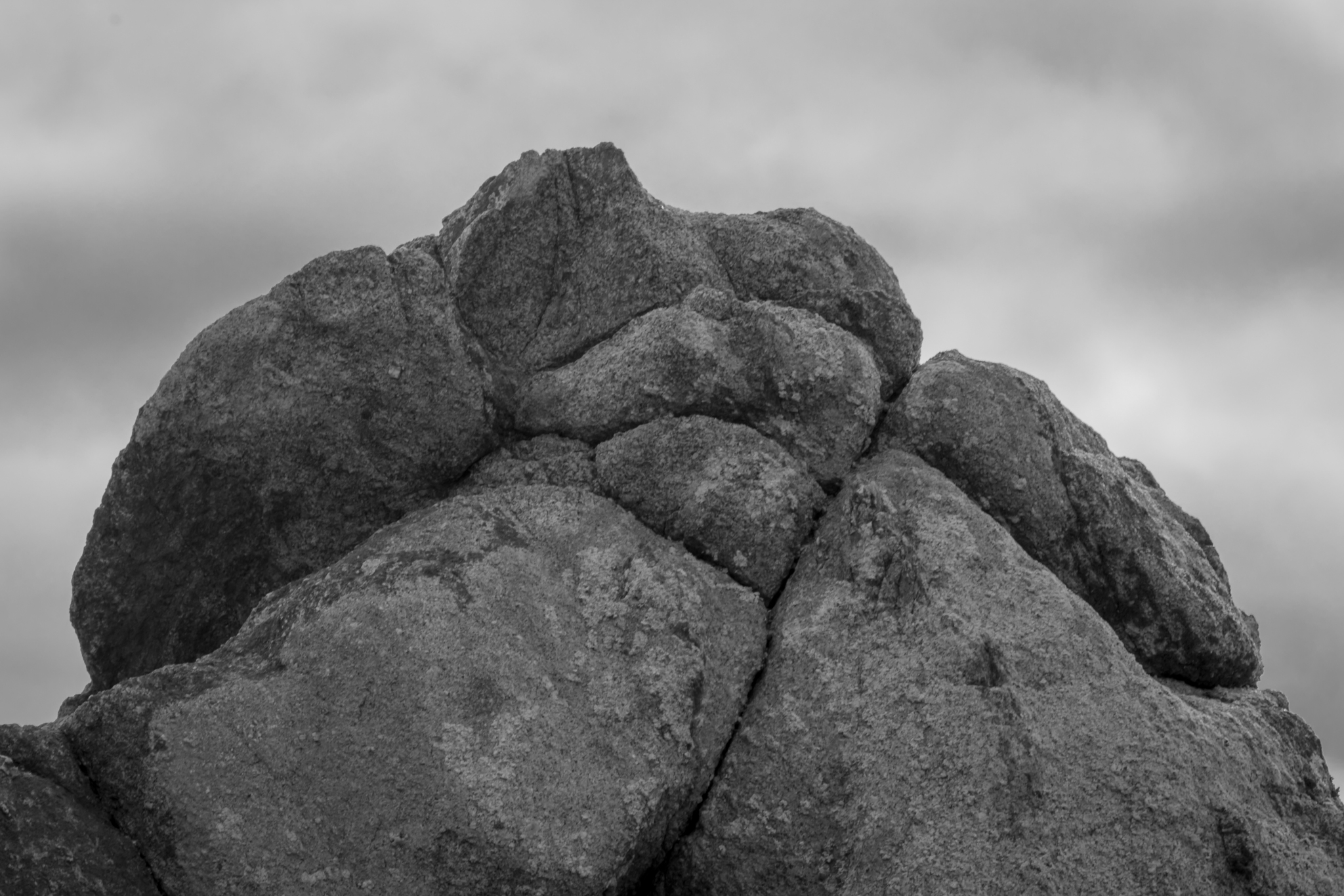 Point Lobos B&W-2093