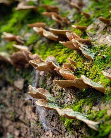 Fungus-5317