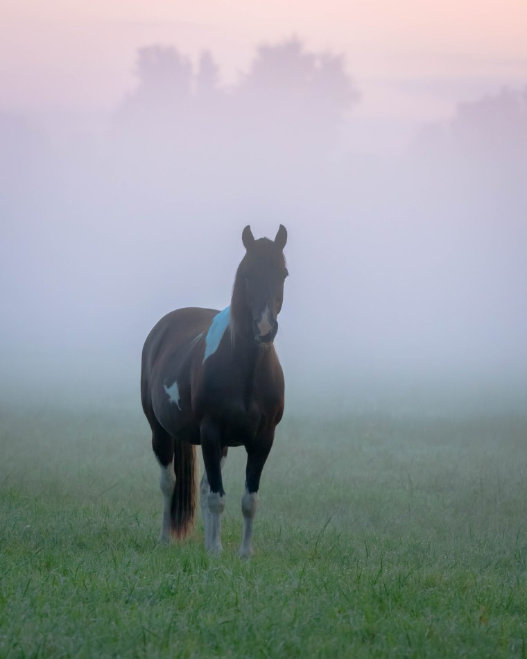 Horse in fog-5289