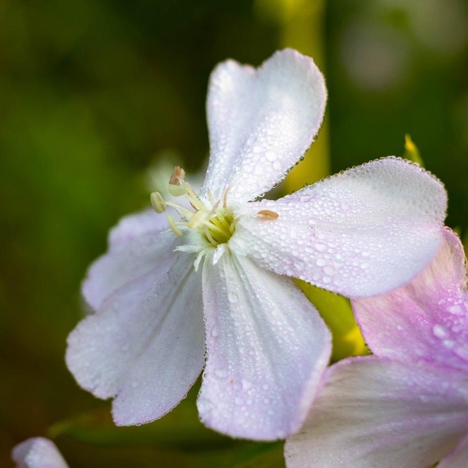 Wildflower-5327