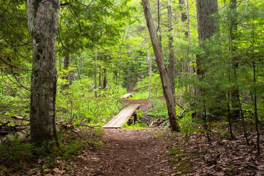 Good Harbor Bay Trail-5612
