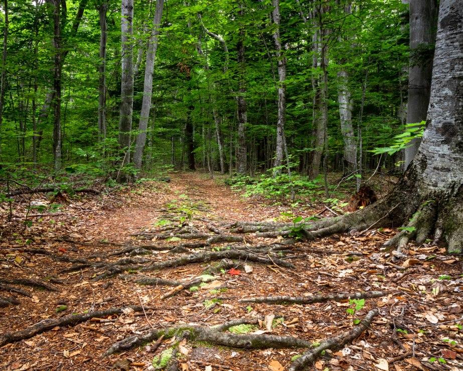 Good Harbor Bay Trail-5619