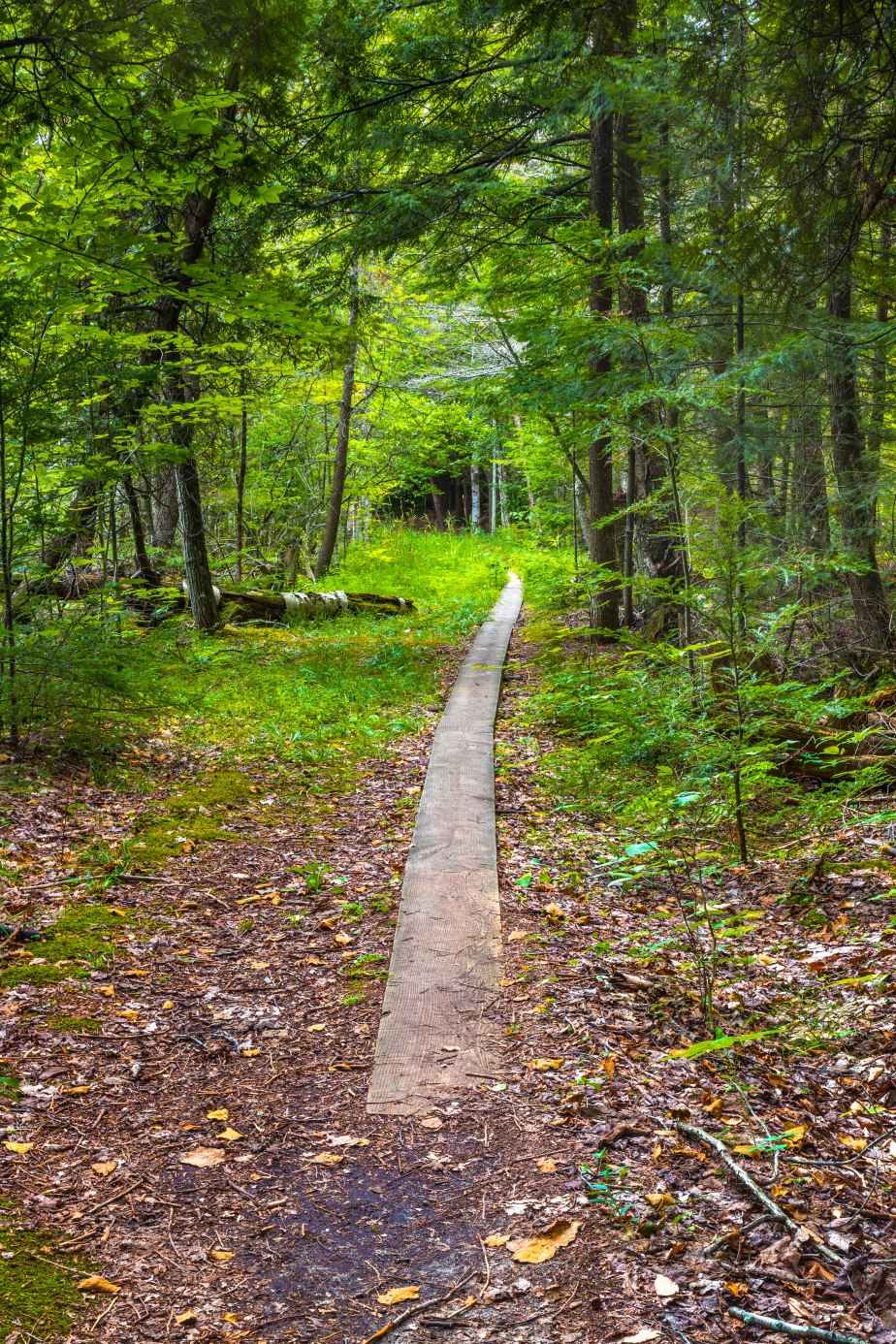 Good Harbor Bay Trail-5620