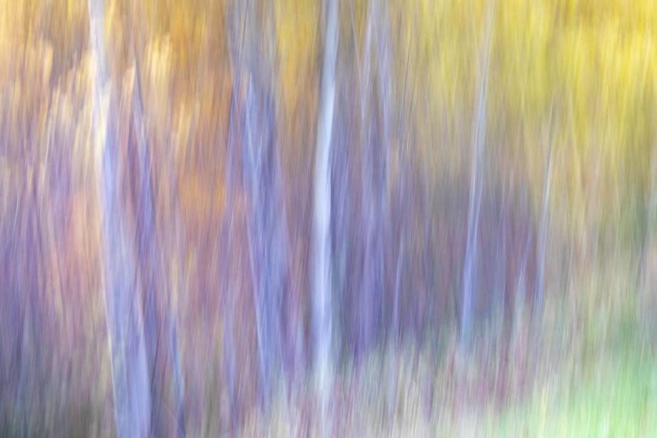 Fall Colors 5 Mile Road-6240
