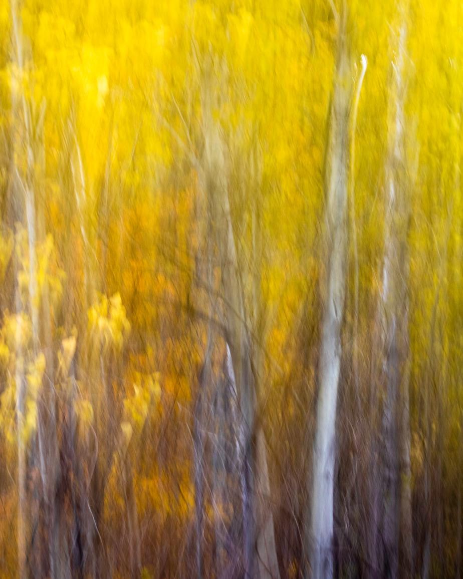 Fall Colors 5 Mile Road-6246