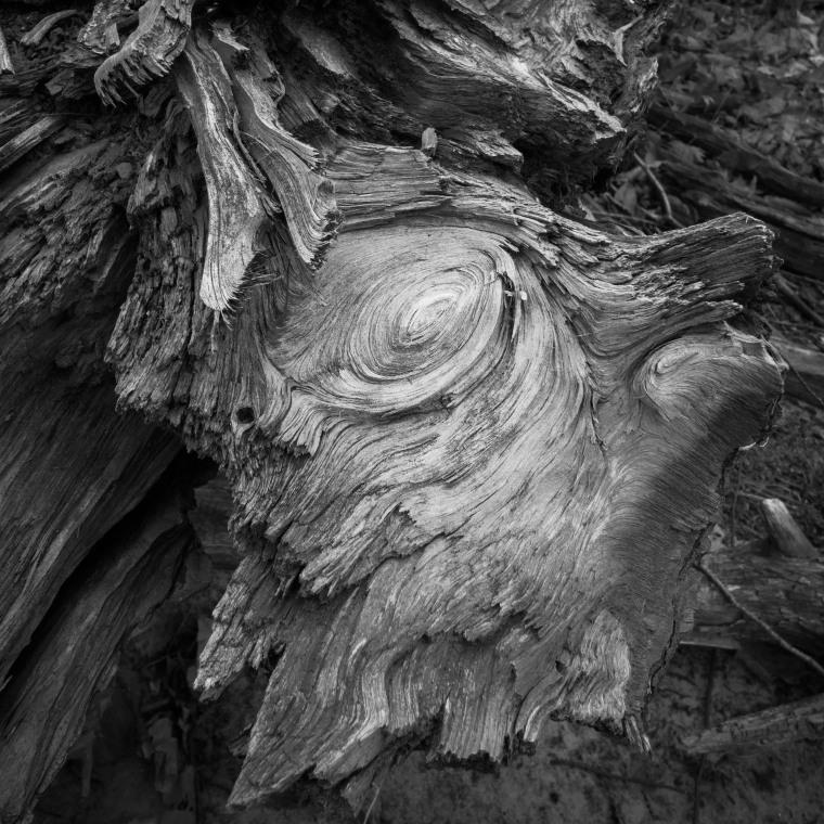 Fallen tree 7504