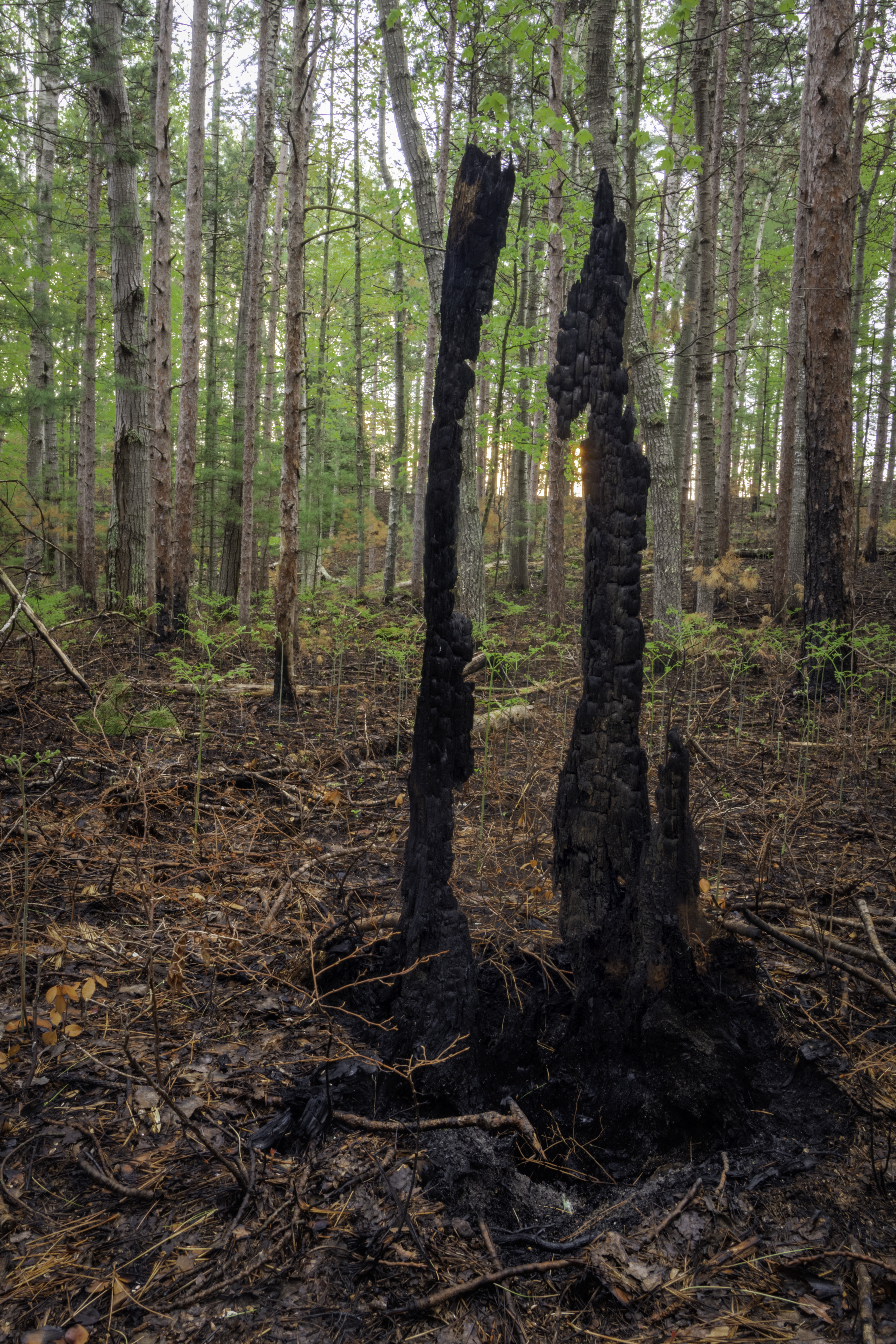 Bass Lake Burn Area-